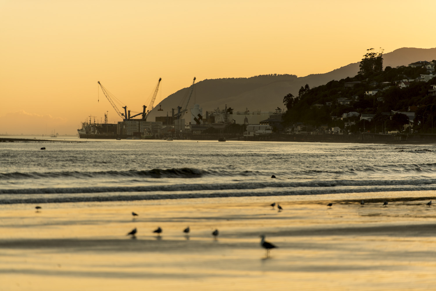 image of AARONTAIT COPYRIGHTED 2014 275 DOCUMENTARY PHOTOGRAPHER NEW ZEALAND EDITORIAL REPORTAGE CUSTOMER ENVIRONMENTAL HUMAN RESOURCES INTERVIEW REAL NATURAL LIGHT BEACH HARBOUR PORT SEAGULLS SUNRISE ENVIRONM