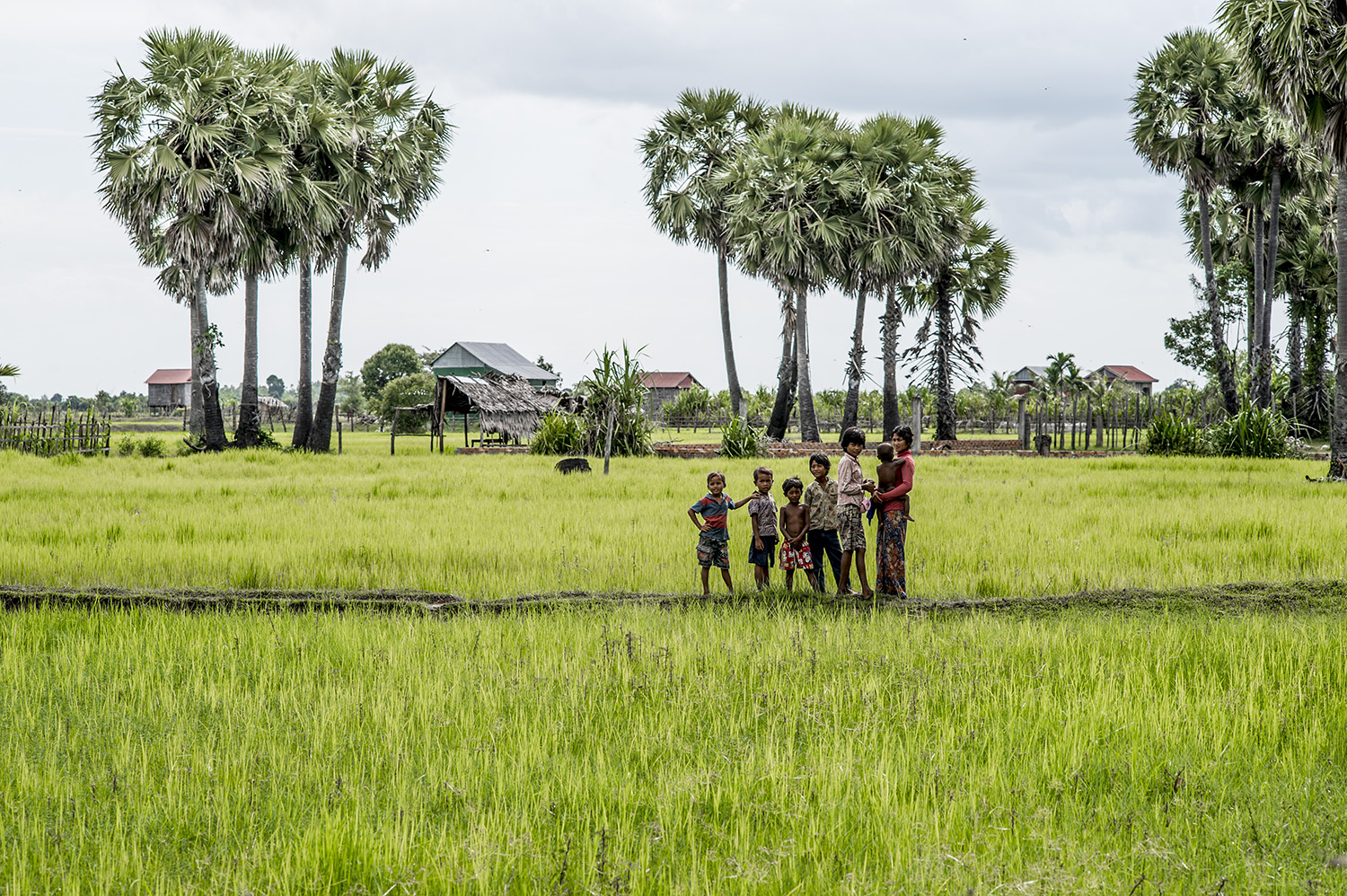 image of AARONTAIT COPYRIGHTED 2014 330 TRAVEL PHOTOGRAPHER ASIA REPORTAGE EDITORIAL STORY HUMANS LIFE EARTH TRAVELER EXPLORE CULTURE PEOPLE COUNTRY NATIONALITY DOCUMENTARY CAMBODIA RICE PADDY CHILDREN VILLAGE