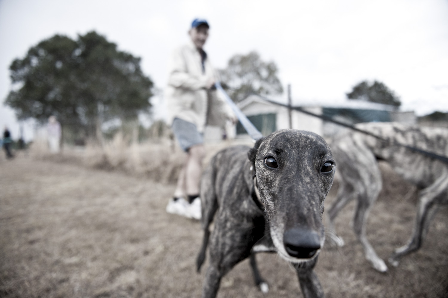 image of AARONTAIT COPYRIGHTED 2014 437 DOCUMENTARY PHOTOGRAPHER REPORTAGE LIFE SPORT DOGS GREYHOUND RACING STORY HUMAN DISHLICKER DISH LICKER WOOF
