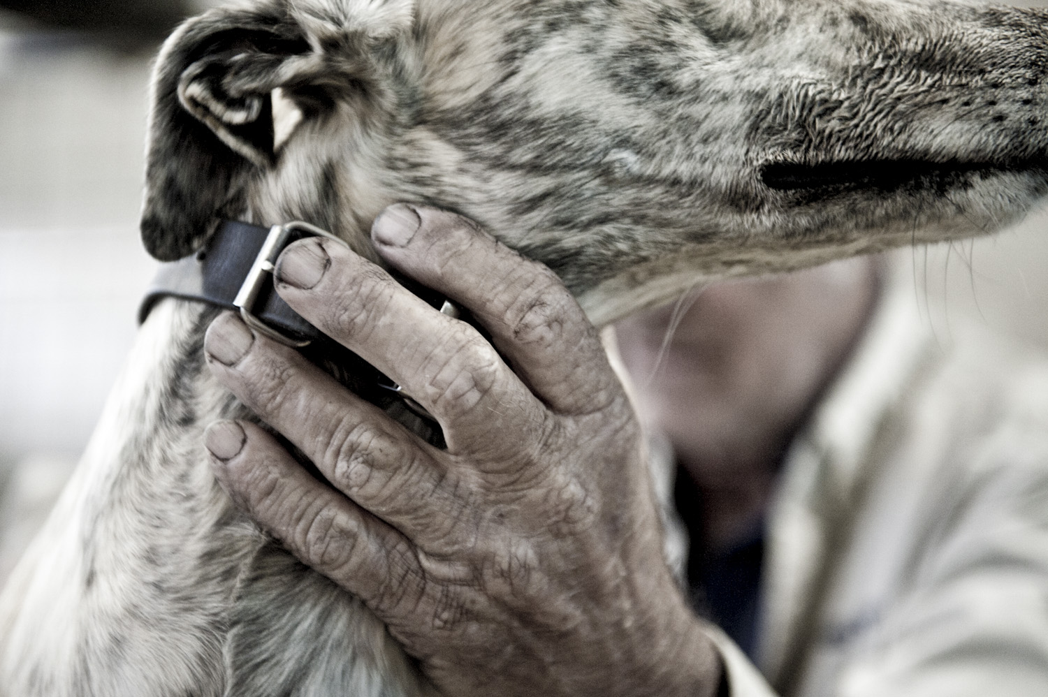 image of AARONTAIT COPYRIGHTED 2014 443 DOCUMENTARY PHOTOGRAPHER REPORTAGE LIFE SPORT DOGS GREYHOUND RACING STORY HUMAN DISHLICKER DISH LICKER HANDS TEXTURE TRUST